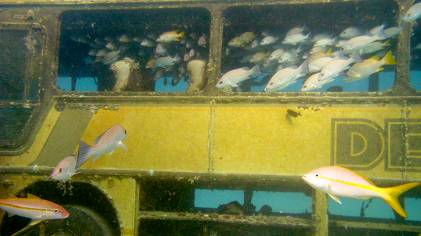 Aruba Reef Enhancement Tour Bus